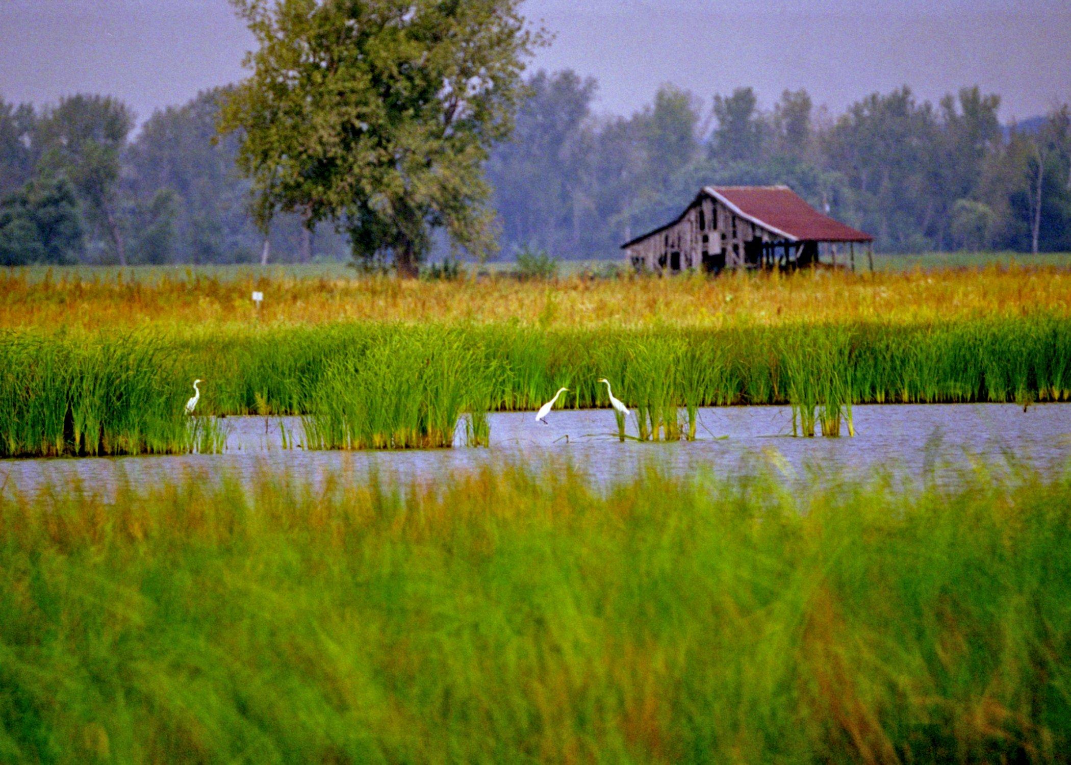 Cbaby wetlands