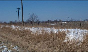 Native Vegetation Preventing Snow Drifts