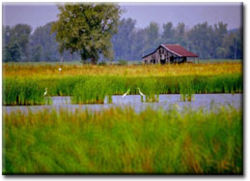 127 good steward wetland 1.jpg