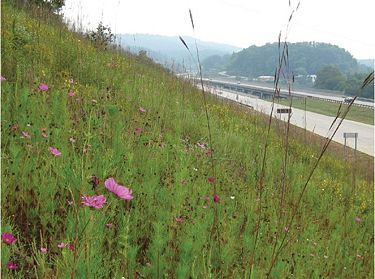 Finished roadside slope with established grasses and wildflowers.